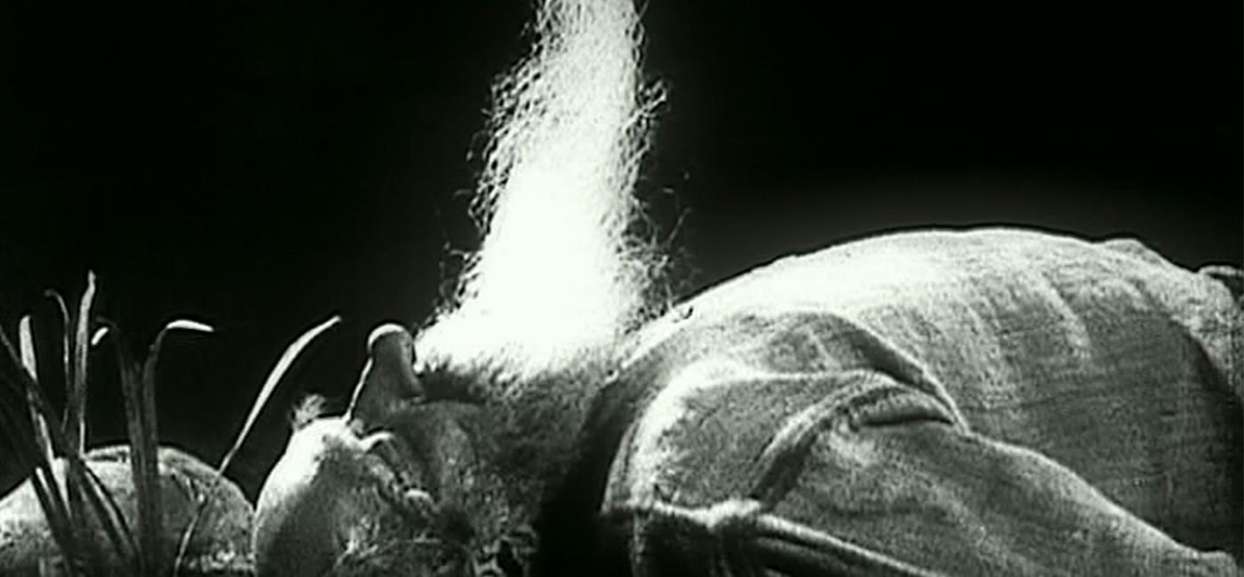 background CINE CONCERT : LE BONHEUR - AU CINEMA LE GYPTIS